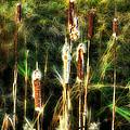 Pretty In A Ditch by John Herzog