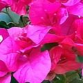 Pretty In Pink by Cheryl Matthew