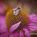 Pretty In Pink by Clare Bambers