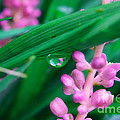 Pretty In Pink  by Peggy Franz
