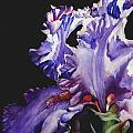 Pretty In Purple by June Rollins