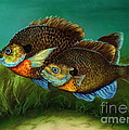Pretty Little Panfish by Kathleen Kelly Thompson