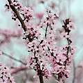 Pretty Pink Flowering Tree by P S