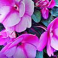 Pretty Pink Flowers by Mikki Cucuzzo
