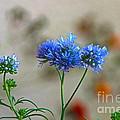 Pretty Weeds by Byron Varvarigos