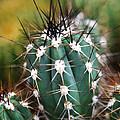 Prickly  by Leslie Leda