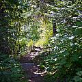 Priest Lake Trail Series IIi - Trail Shadows by David Patterson