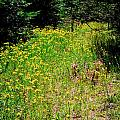 Priest Lake Trail Series Iv - Small Meadow by David Patterson
