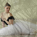 Prima Ballerina by Denise Wilkins