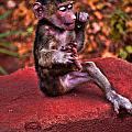 Primate Footsie Games by Mike Cherry