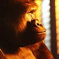 Primate Reflecting by Scott Hovind