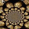 Primrose Design by Chris Berry