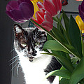 Princess The Cat And Tulips by Carl Deaville