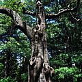 Princess Tree by Wanda J King