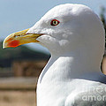 Profile Of a Seagull