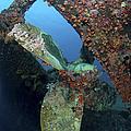 Propeller Of Hilma Hooker Shipwreck by Karen Doody