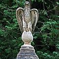 Protection Of An Eagle by Cyryn Fyrcyd