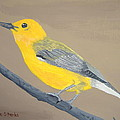 Prothonotary Warbler by Norm Starks