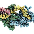 Protozoan Rna-binding Protein Complex by Laguna Design