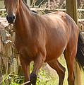 Proud Horse by Joris Shaw