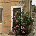 Provence Door Number 9 by Lainie Wrightson