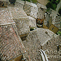 Provence Rooftops by Pamela Canzano