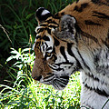 Prowling by Lauren Nicholson