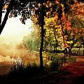 Psychedelic Autumn by Gabor Dvornik