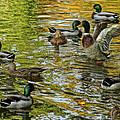 Ducks Unlimited 02 by Jeff Stallard