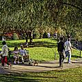 Public Garden 11 by Jeff Stallard