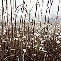 Puffed Wheat by Pat Purdy