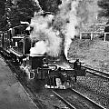 Puffing Billy Black And White by Douglas Barnard