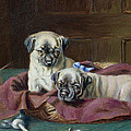 Pug Puppies In A Basket by  Horatio Henry Couldery