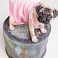Pug Puppy Pink Sun Dress by Edward Fielding