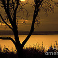 Pugent Sound Silhouetted Tree by Mike Nellums