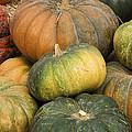 Pumpkin Farm by Jim And Emily Bush