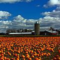 Pumpkin Farm by Randall  Cogle