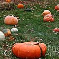 Pumpkin Field by Susan Herber