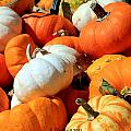 Pumpkin Harvest by Betty Northcutt