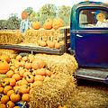 Pumpkin Harvest by Connie Dye