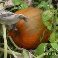 Pumpkin On The Vine by Smilin Eyes  Treasures