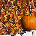 Pumpkin On White Fence Post by Garry Gay