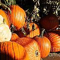 Pumpkin Palooza by Susan Herber