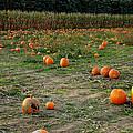 Pumpkin Patch by LeeAnn McLaneGoetz McLaneGoetzStudioLLCcom