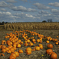 Pumpkin Patch by Lesley Jane Smithers