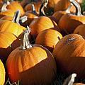 Pumpkin Patch by Ricky Barnard