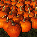 Pumpkin Pie Anyone by LeeAnn McLaneGoetz McLaneGoetzStudioLLCcom