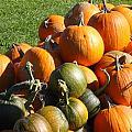 Pumpkin Pile  by Sarah Gayle Carter