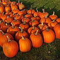 Pumpkin Piles by LeeAnn McLaneGoetz McLaneGoetzStudioLLCcom
