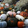 Pumpkin Piles by Susan Herber